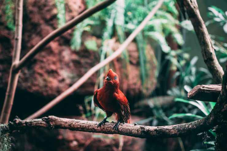 selective focus photography of red perching bird